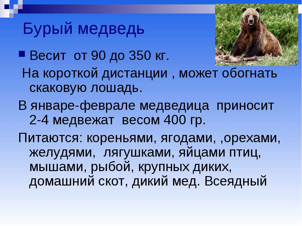 Бурый медведь Весит от 90 до 350 кг. На короткой дистанции , может обогнать с...