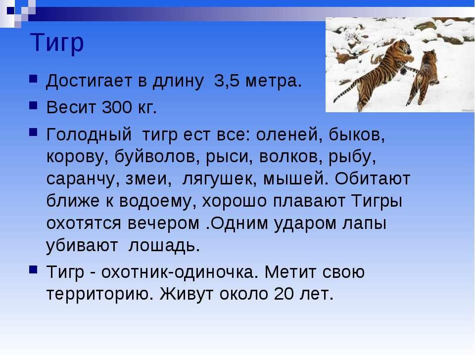 Тигр Достигает в длину 3,5 метра. Весит 300 кг. Голодный тигр ест все: оленей...
