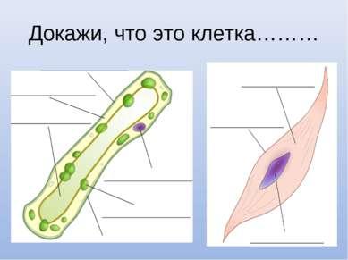 Докажи, что это клетка………