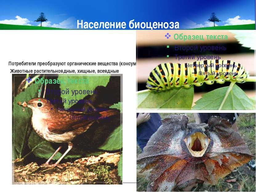 Население биоценоза Потребители преобразуют органические вещества (консументы...