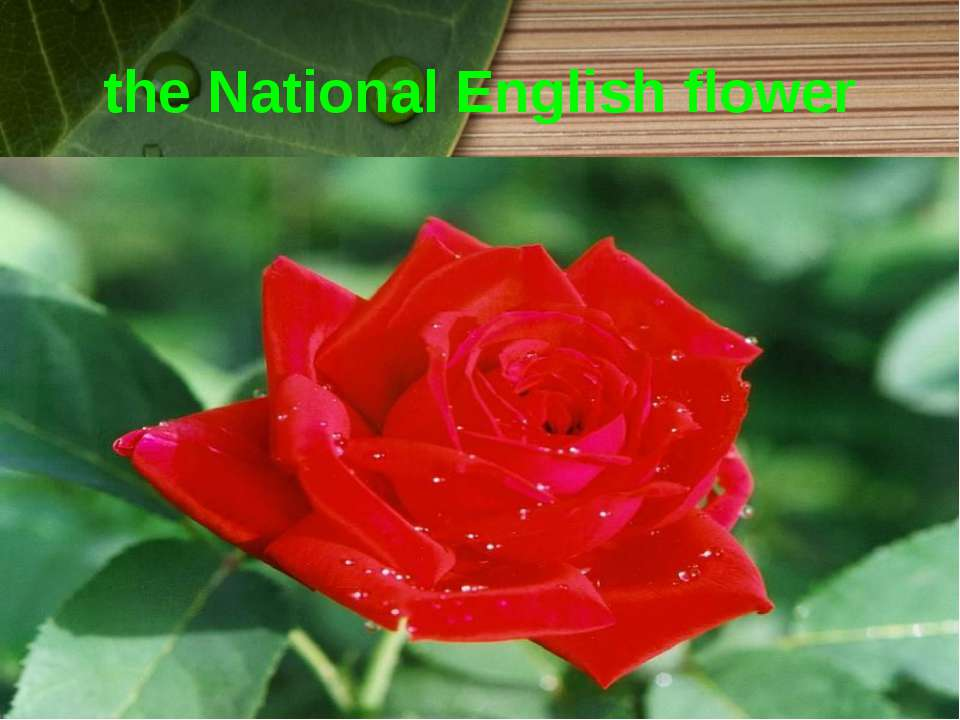 the National English flower