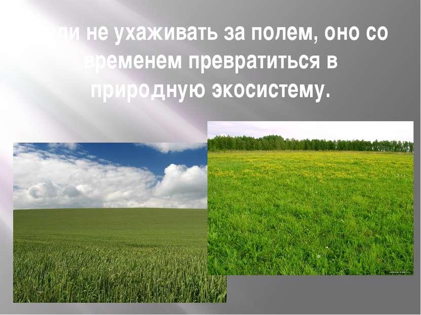 Если не ухаживать за полем, оно со временем превратиться в природную экосистему.
