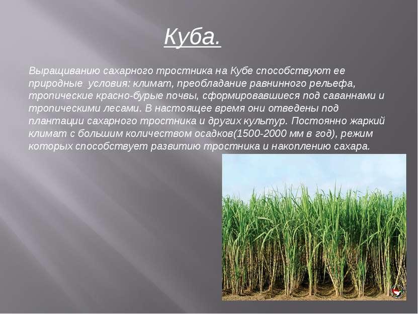 Куба. Выращиванию сахарного тростника на Кубе способствуют ее природные услов...