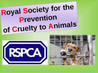 Royal Society for the Prevention of Cruelty to Animals