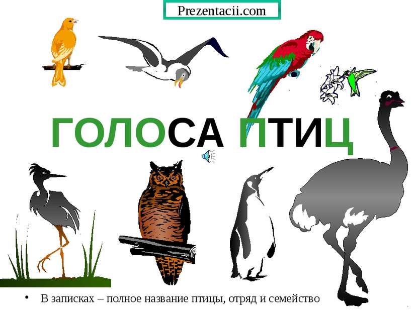 ГОЛОСА ПТИЦ В записках – полное название птицы, отряд и семейство Prezentacii...