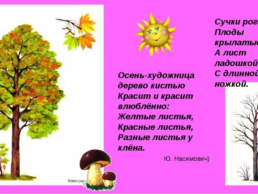 Сучки рогатые, Плоды крылатые, А лист ладошкой, С длинной ножкой. Осень-худож...
