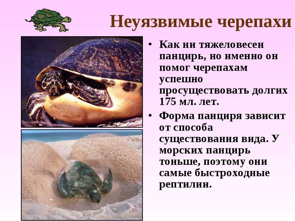 Неуязвимые черепахи Как ни тяжеловесен панцирь, но именно он помог черепахам ...