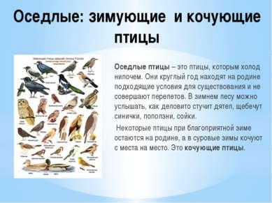 Оседлые: зимующие и кочующие птицы Оседлые птицы – это птицы, которым холод н...