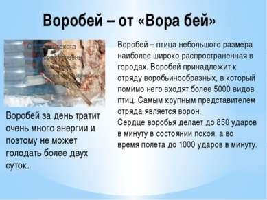 Воробей – от «Вора бей» Воробей – птица небольшого размера наиболее широко ра...