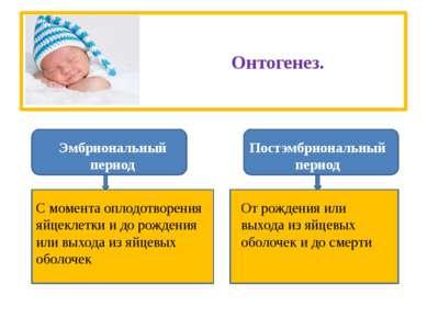 Онтогенез. Эмбриональный период Постэмбриональный период С момента оплодотвор...