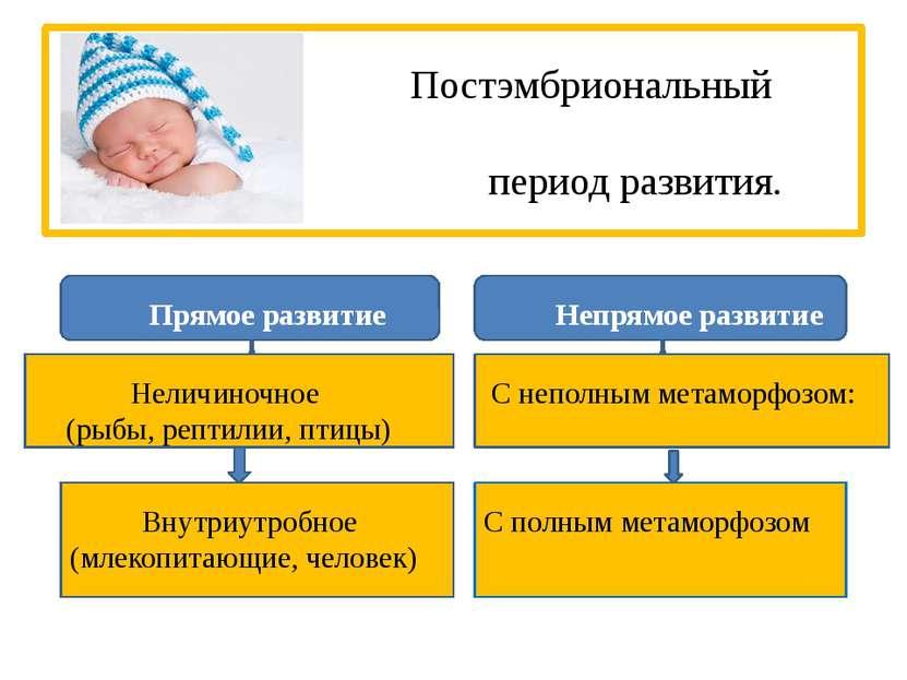 Постэмбриональный период развития. Прямое развитие Непрямое развитие Неличино...