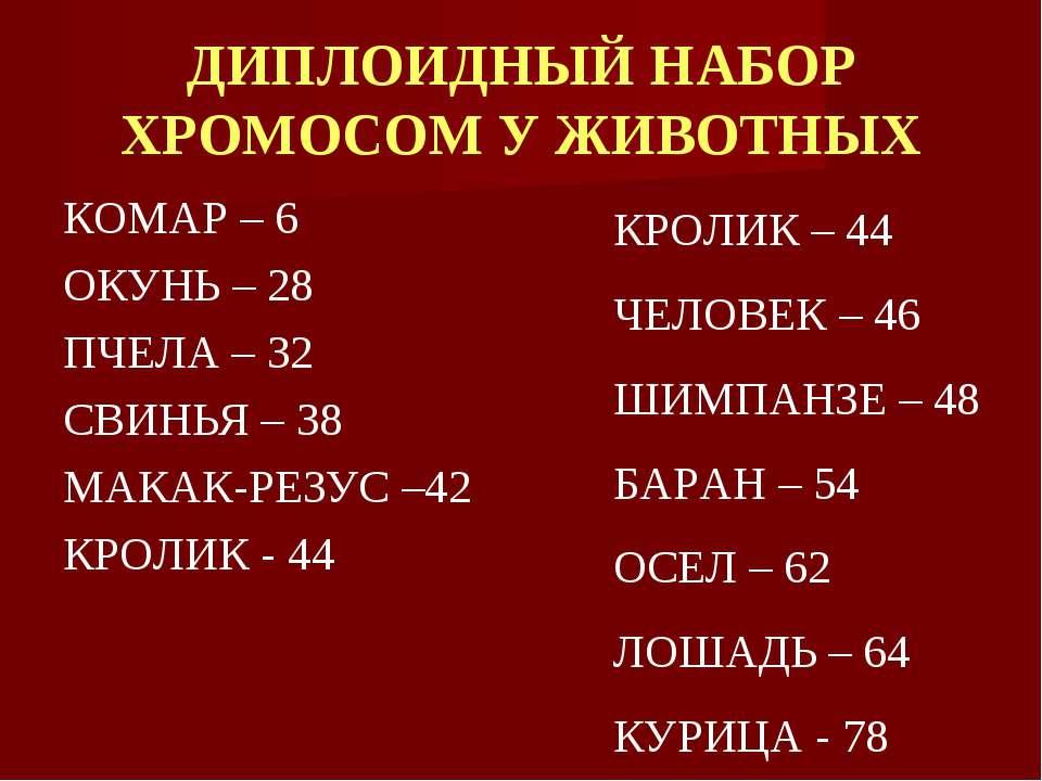 ДИПЛОИДНЫЙ НАБОР ХРОМОСОМ У ЖИВОТНЫХ КОМАР – 6 ОКУНЬ – 28 ПЧЕЛА – 32 СВИНЬЯ –...