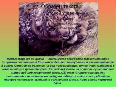 Мадагаскарские хищники— эндемичное семейство млекопитающих хищников состояще...
