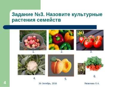 * Яковлева Л.А. * Задание №3. Назовите культурные растения семейств 1. 2. 3. ...