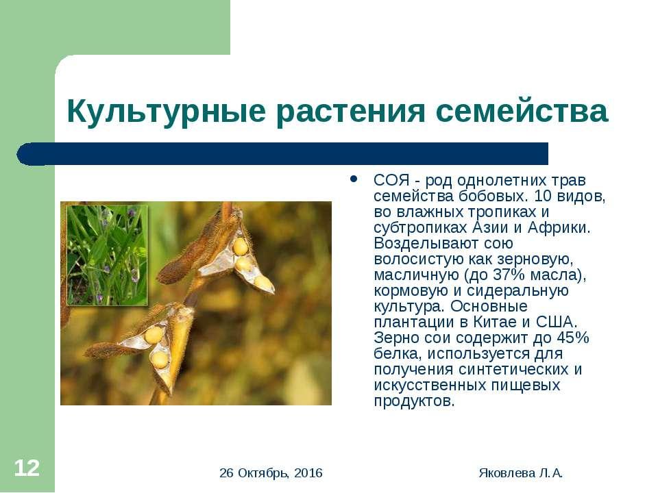 * Яковлева Л.А. * Культурные растения семейства СОЯ - род однолетних трав сем...