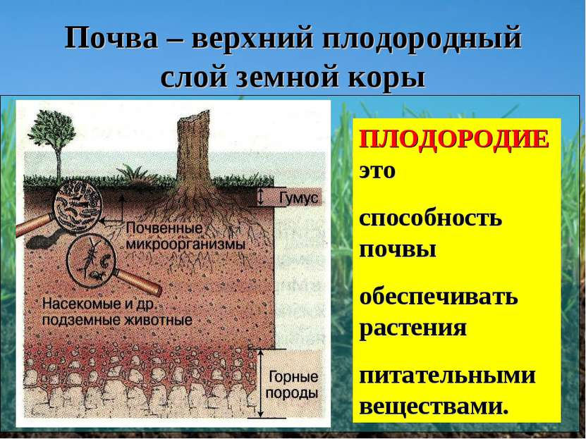 Почва – верхний плодородный слой земной коры ПЛОДОРОДИЕ это способность почвы...