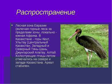 Распространение Лесная зона Евразии (включая горные леса за пределами зоны, л...