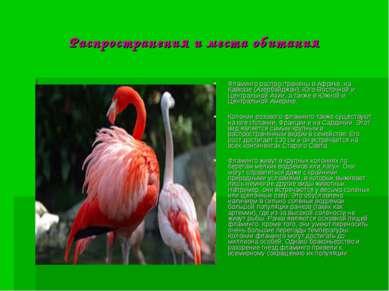 Распространения и места обитания Фламинго распространены в Африке, на Кавказе...