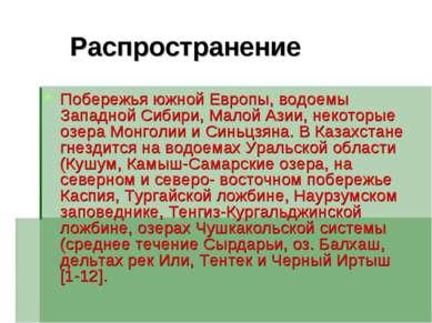 Распространение Побережья южной Европы, водоемы Западной Сибири, Малой Азии, ...