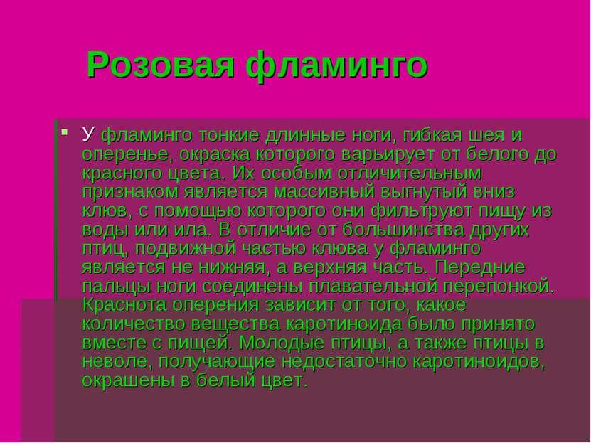Розовая фламинго У фламинго тонкие длинные ноги, гибкая шея и оперенье, окрас...