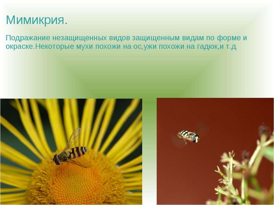 Мимикрия. Подражание незащищенных видов защищенным видам по форме и окраске.Н...