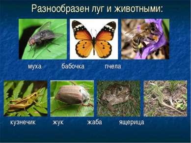 Разнообразен луг и животными: муха бабочка пчела кузнечик жук жаба ящерица