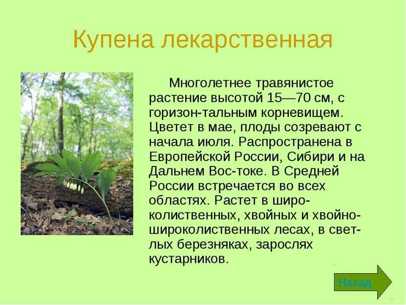 Купена лекарственная Многолетнее травянистое растение высотой 15—70 см, с гор...