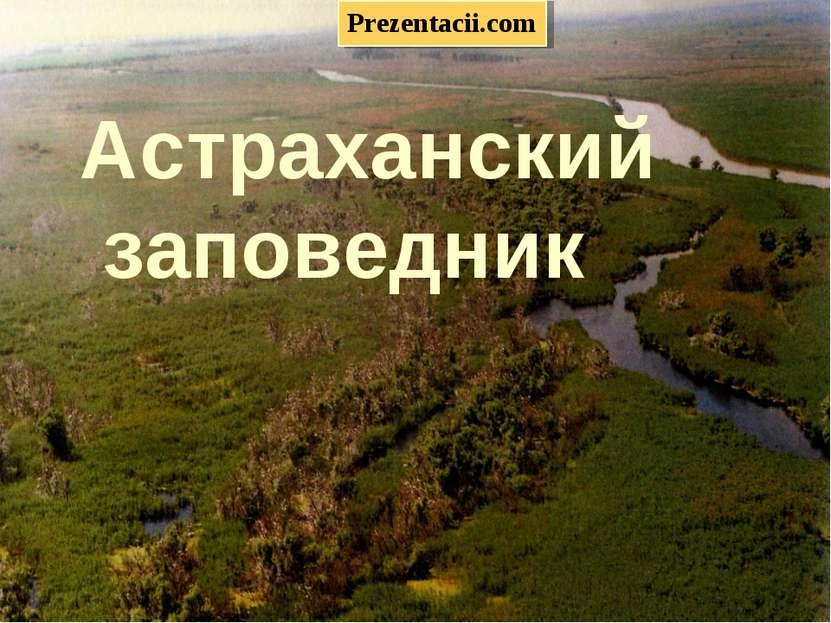 «Астраханский заповедник» Астраханский заповедник Prezentacii.com