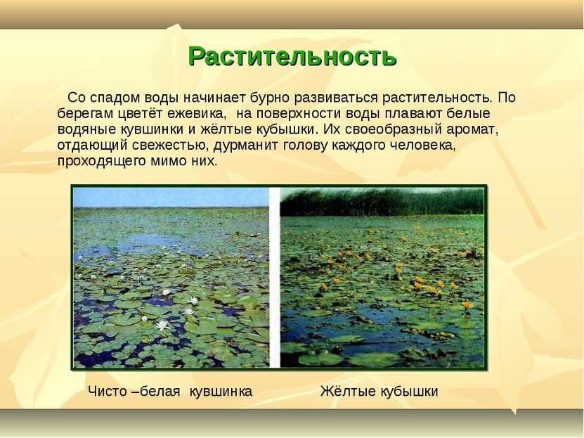 Растительность Со спадом воды начинает бурно развиваться растительность. По б...