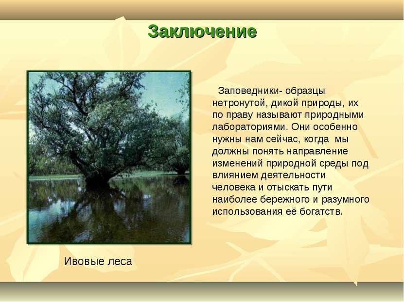 Заключение Заповедники- образцы нетронутой, дикой природы, их по праву называ...