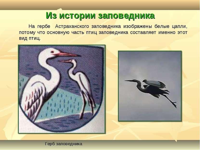 Из истории заповедника На гербе Астраханского заповедника изображены белые ца...