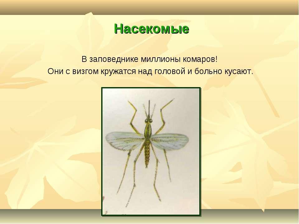 Насекомые В заповеднике миллионы комаров! Они с визгом кружатся над головой и...