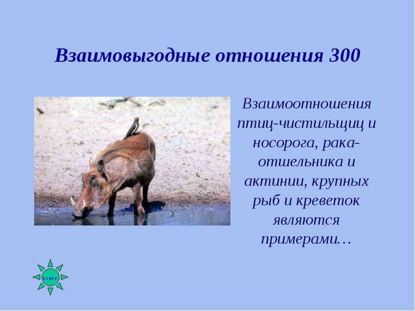 Взаимовыгодные отношения 300 Взаимоотношения птиц-чистильщиц и носорога, рака...