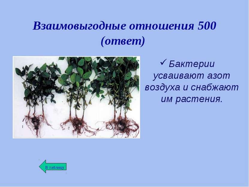 Взаимовыгодные отношения 500 (ответ) Бактерии усваивают азот воздуха и снабжа...