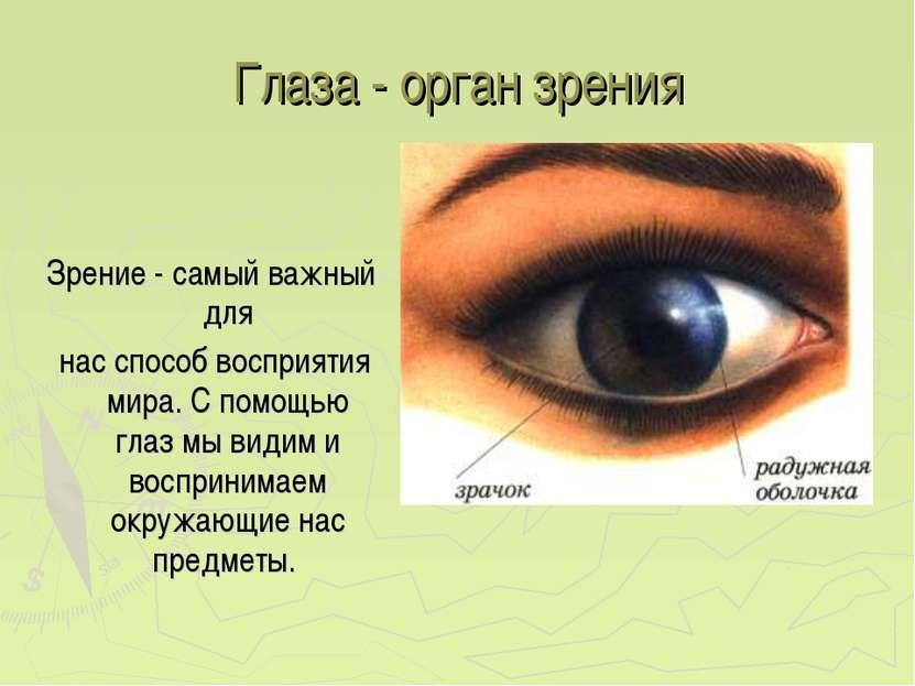 Глаза - орган зрения Зрение - самый важный для нас способ восприятия мира. С ...