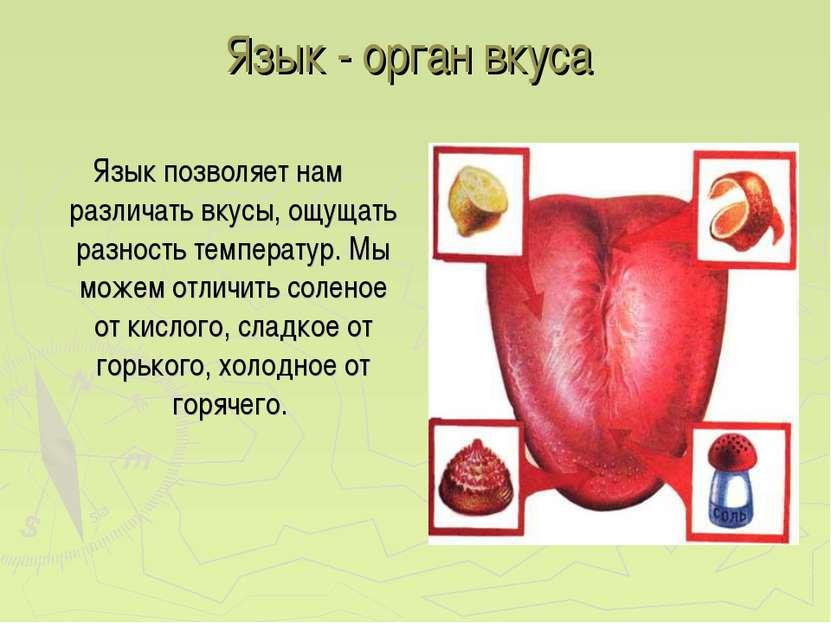 Язык - орган вкуса Язык позволяет нам различать вкусы, ощущать разность темпе...