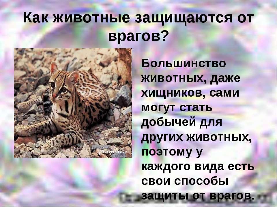 Как животные защищаются от врагов? Большинство животных, даже хищников, сами ...