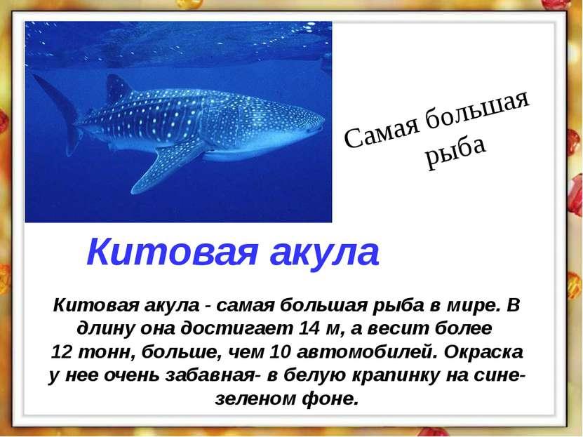 Китовая акула - самая большая рыба в мире. В длину она достигает 14 м, а веси...