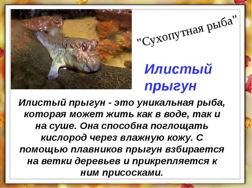 Илистый прыгун - это уникальная рыба, которая может жить как в воде, так и на...