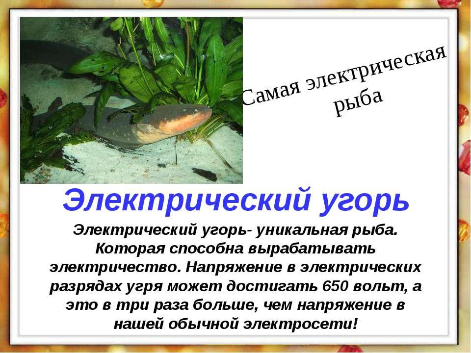 Электрический угорь- уникальная рыба. Которая способна вырабатывать электриче...