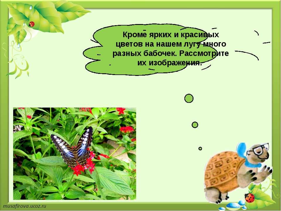 Кроме ярких и красивых цветов на нашем лугу много разных бабочек. Рассмотрите...