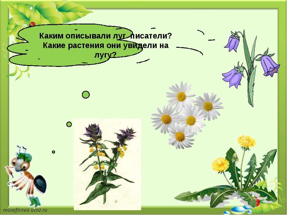 Каким описывали луг писатели? Какие растения они увидели на лугу?