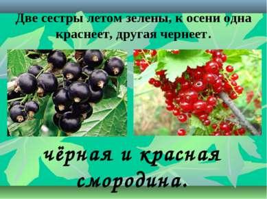 Две сестры летом зелены, к осени одна краснеет, другая чернеет. чёрная и крас...
