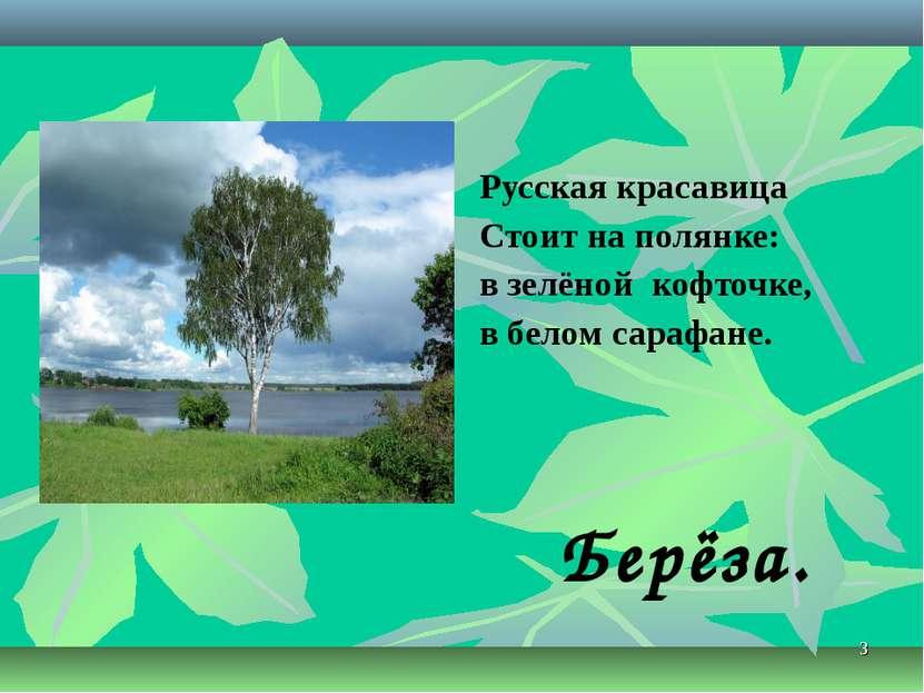 * Берёза. Русская красавица Стоит на полянке: в зелёной кофточке, в белом сар...