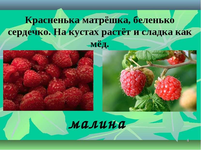 * Красненька матрёшка, беленько сердечко. На кустах растёт и сладка как мёд. ...