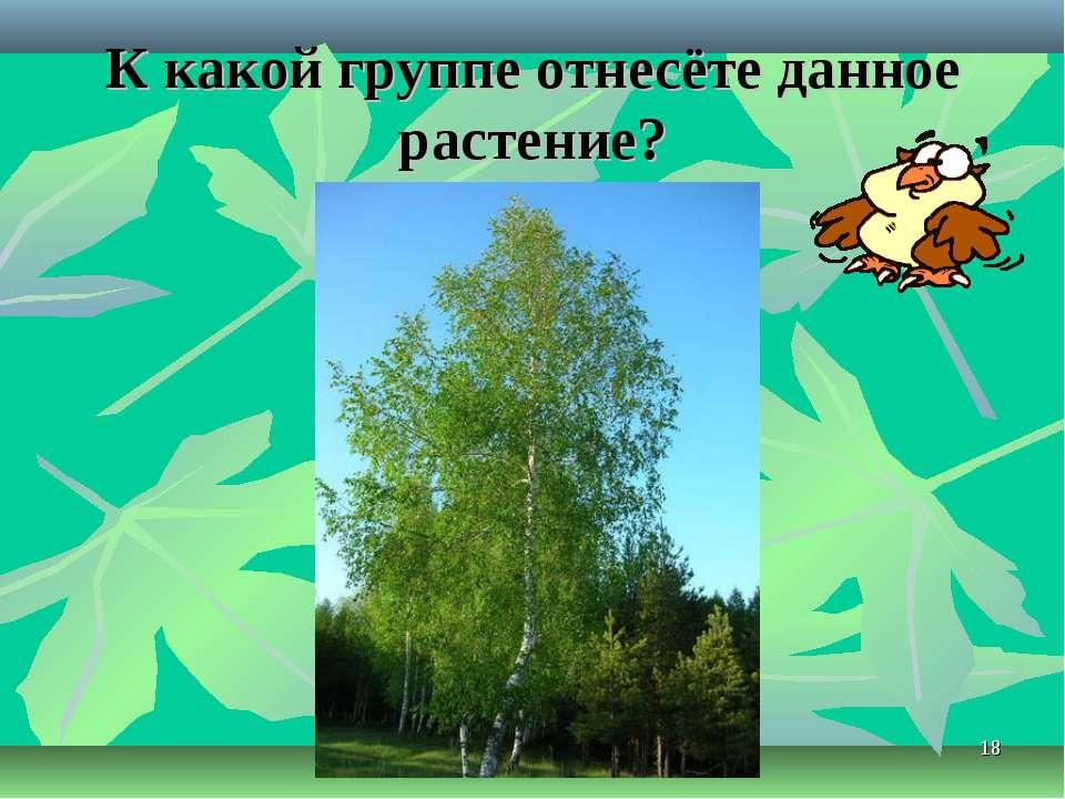 * К какой группе отнесёте данное растение?