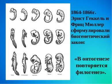 «В онтогенезе повторяется филогенез». 1864-1866г. Эрнст Геккель и Фриц Мюллер...