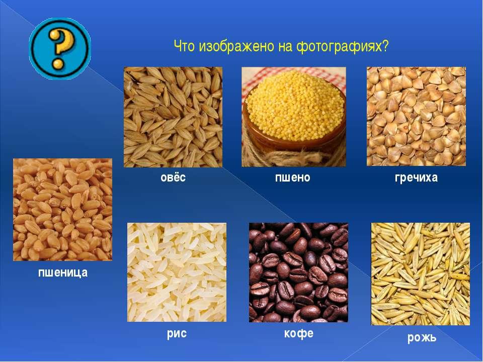 Что изображено на фотографиях? пшено гречиха овёс кофе рис рожь пшеница