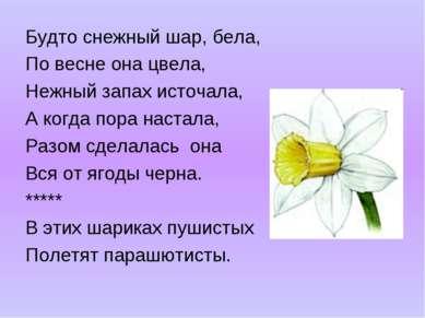 Будто снежный шар, бела, По весне она цвела, Нежный запах источала, А когда п...