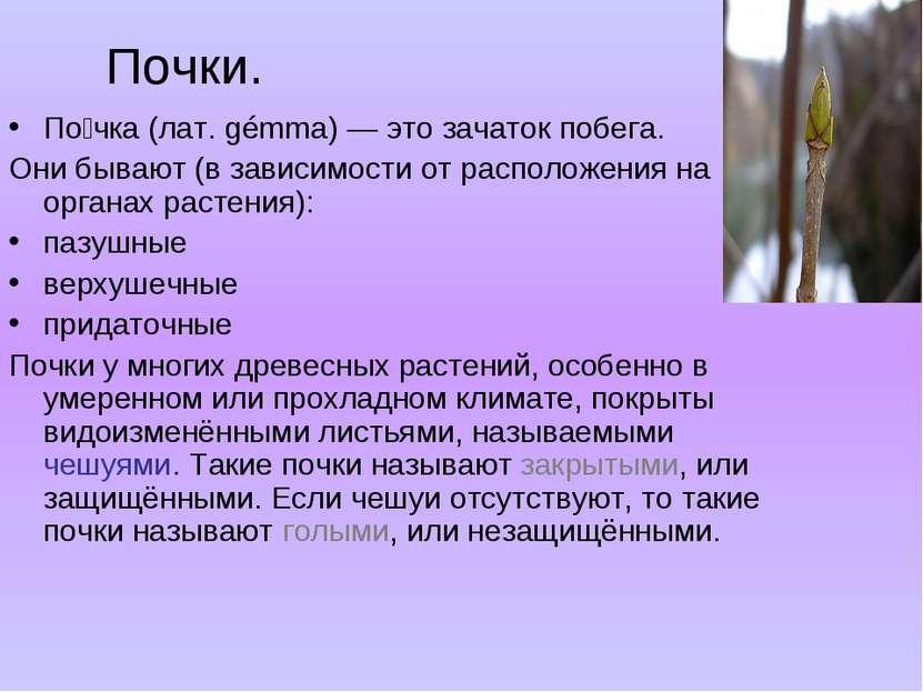 Почки. По чка (лат. gémma) — это зачаток побега. Они бывают (в зависимости от...